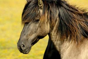 cavallo-da-lavoro